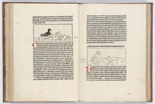 Het gedrukte boek in al zijn verschijningsvormen