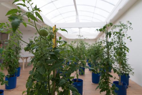 Uli Westphal transformeert SMBA tot tomatenkas