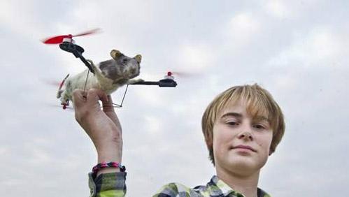 Zoek de 10 verschillen: vliegende rat/kat